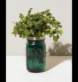 Garden Jar Cilantro