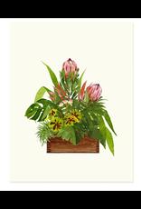 Felix Doolittle Protea Arrangement Card