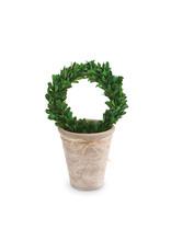 Preserved Boxwood Topiary Wreath Medium