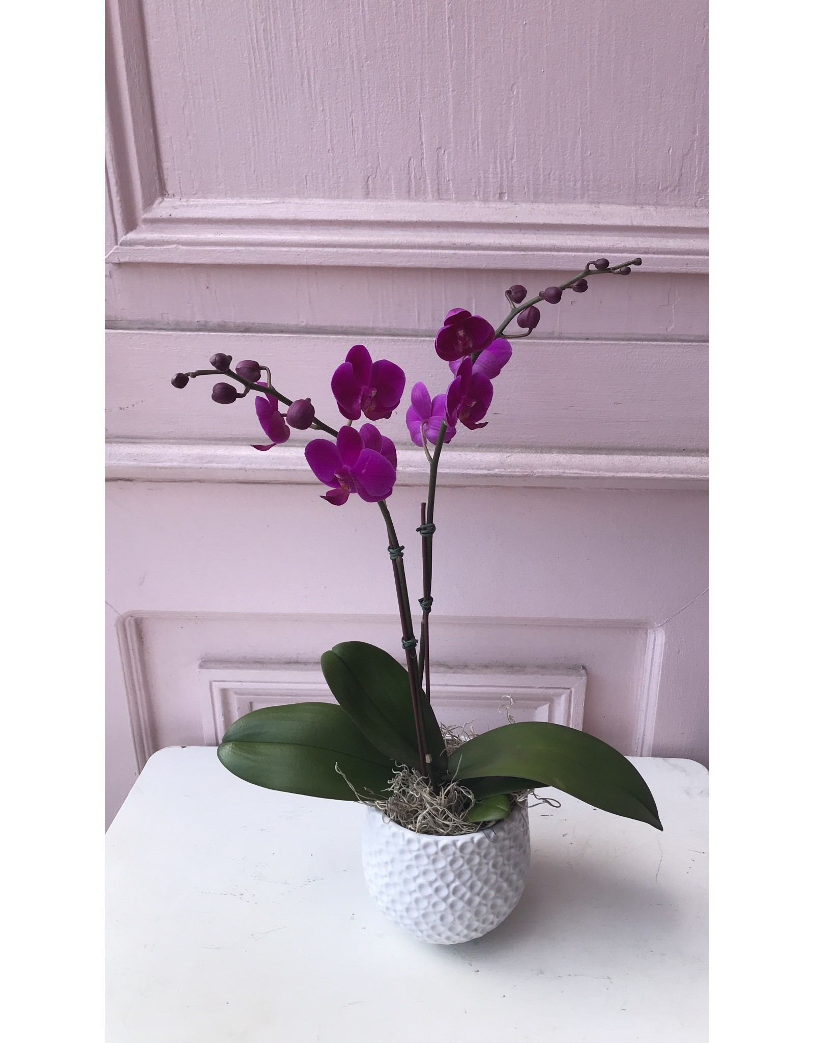 Small Double Stem Magenta Orchid in Ginny Pot