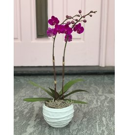 Small Double Stem Magenta Orchid in Wavy Cearmic Pot