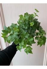 """Plant Shop at Junebug Ivy 4"""""""