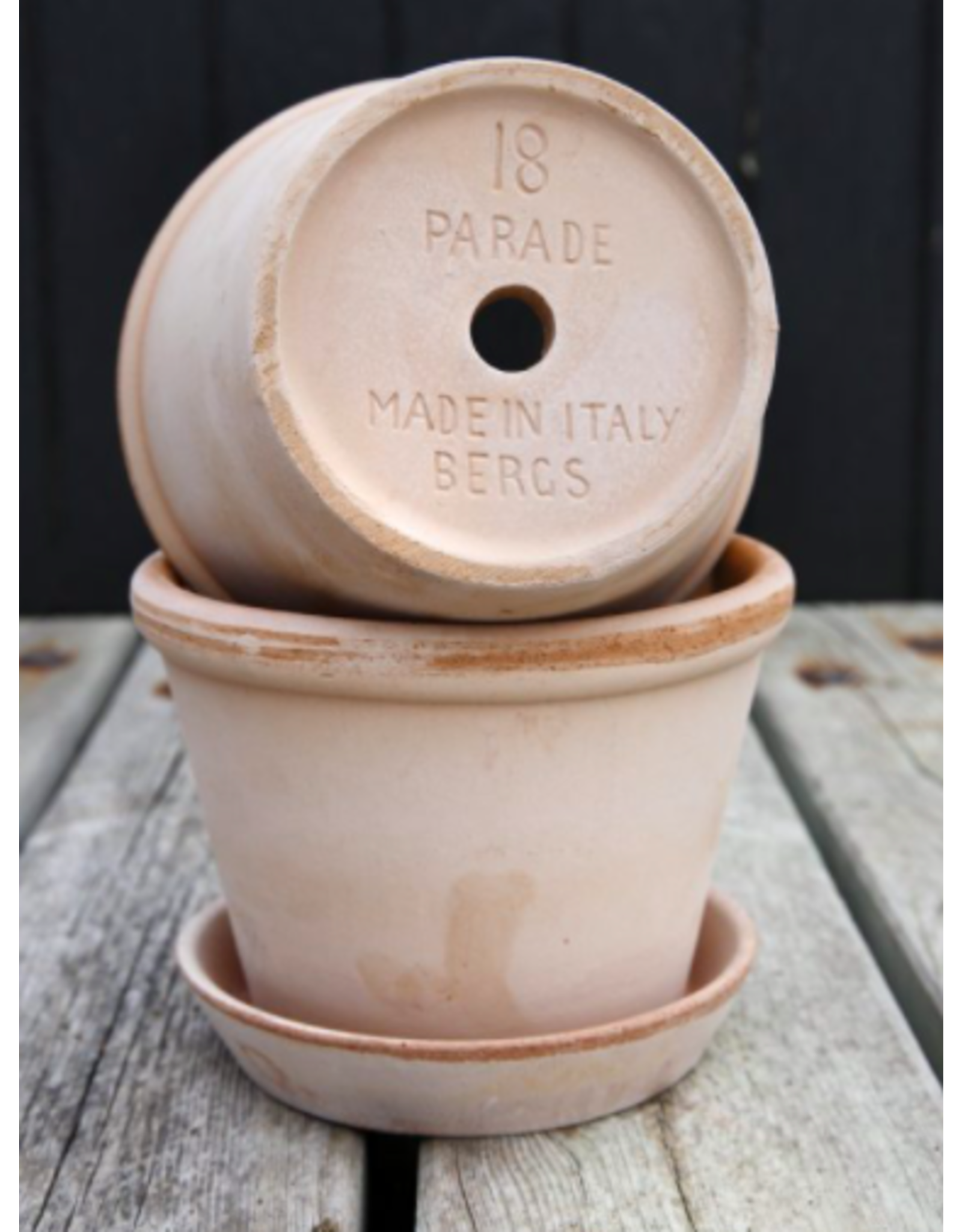 """Bergs Potter Parade Pot in Rose + Saucer by Bergs Potter 7.1"""""""