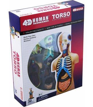 4D Master Human Torso