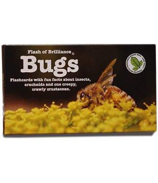 Flash of Brillance Bug Flashcards