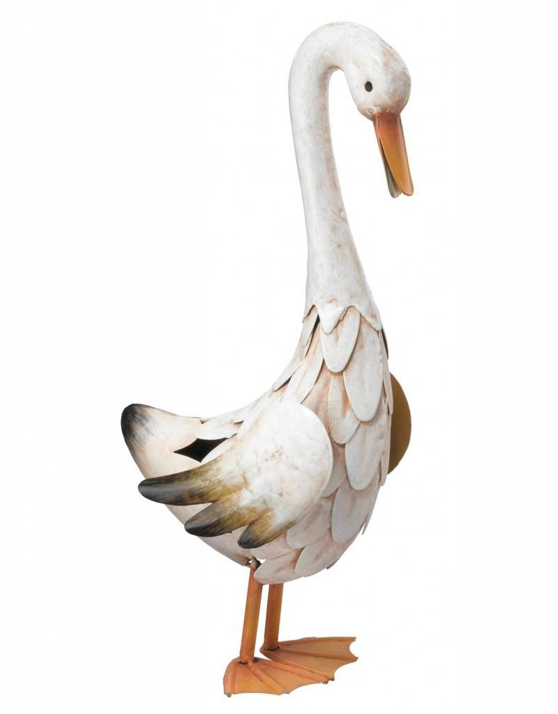 Duck - Md