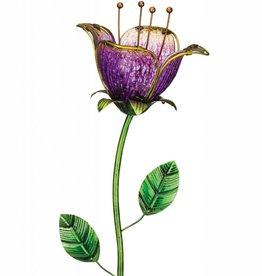 Twilight Tulip
