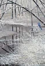 Ron Wetzel Art Winter Blue Jay - 16x20 Print