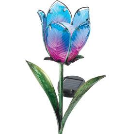 Solar Tulip - Blue/Pink
