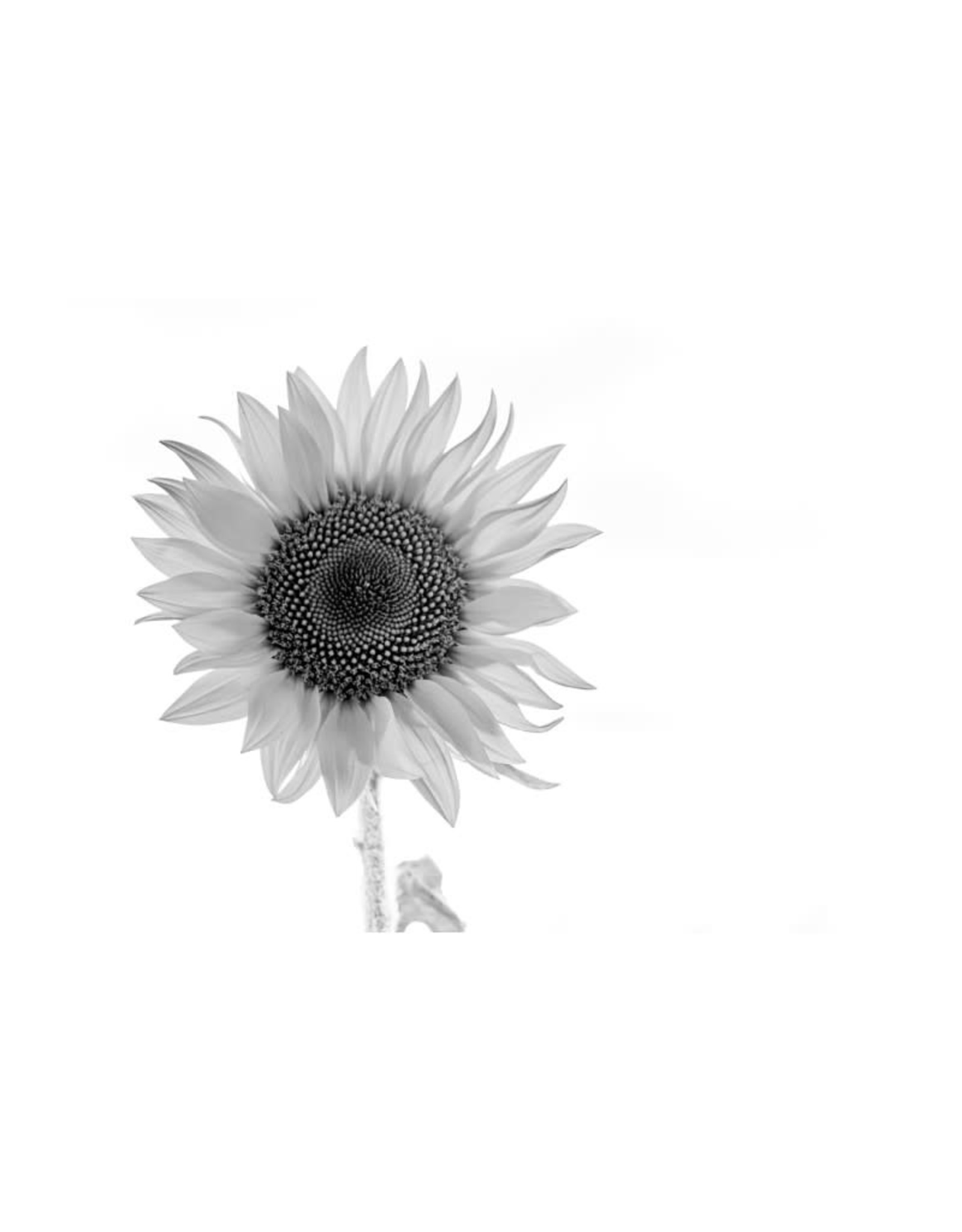 Nick Irwin Images Sunny Disposition Black & White
