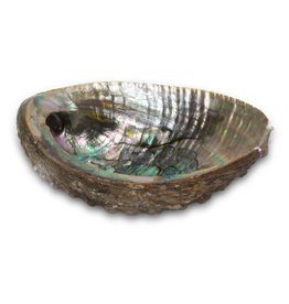 Smudge Accesories Abalone Shell Burner