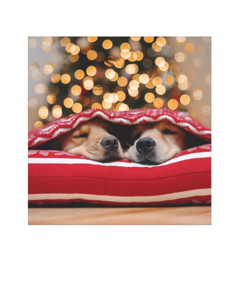 Card BX XMAS 2 Dogs Xmas Lights