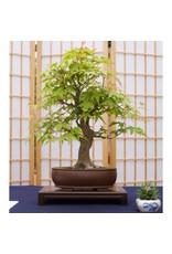 Jonsteen Company Bonsai Tree Starter Kit