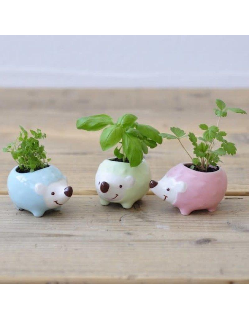 Hedgie Green - Asst. Plant/Colors