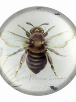 Paperweight Bee Print Glass