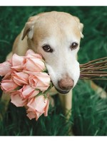 Card TY Dog w/ Pink Roses