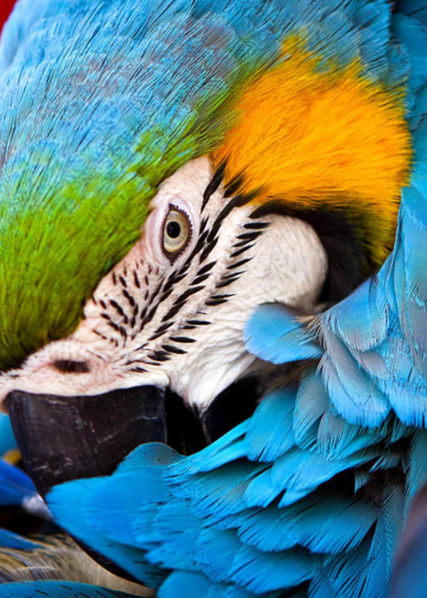 Puzzle Wooden Mini  Blue Parrot 50 Pieces