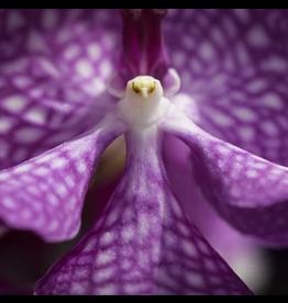 Puzzle Wooden Mini  Purple Orchid 50 Pieces