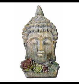 Buddha Head Statue w/Succulents