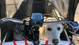 Meet Kristoff, Our Shop Dog