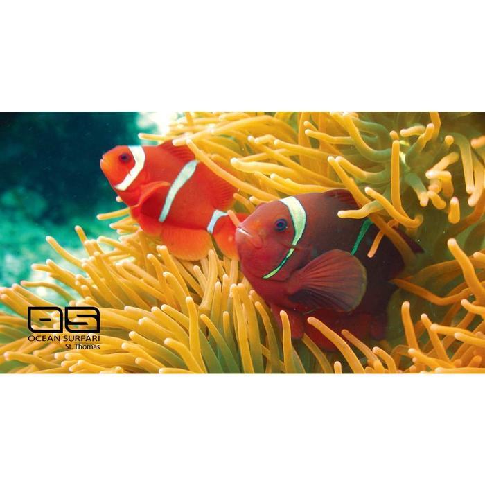 Beach Towel Clown Fish
