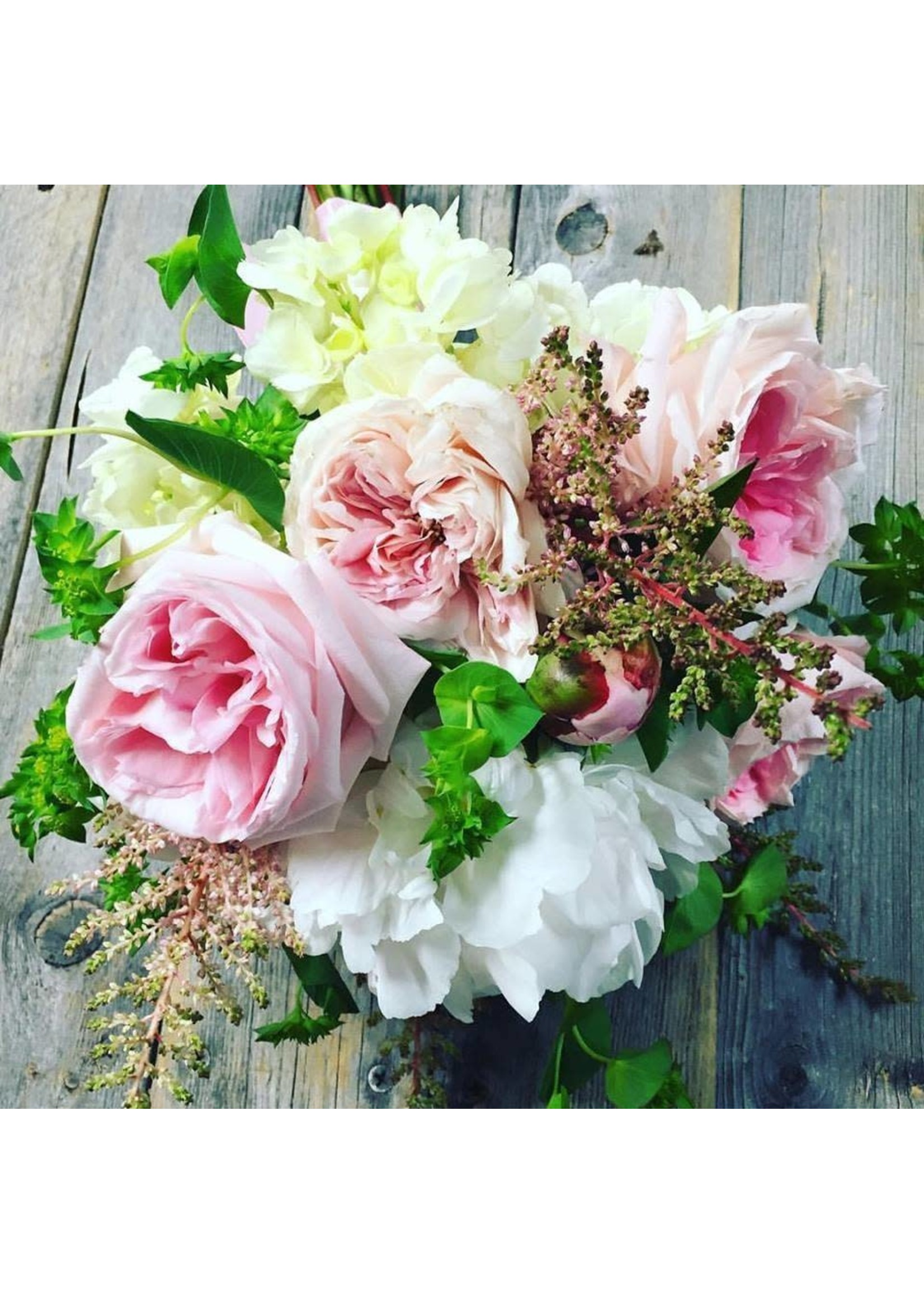 Large Modest Seasonal Blooms