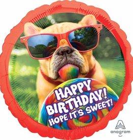 """Qualatex 28"""" Happy B-Day Dog"""