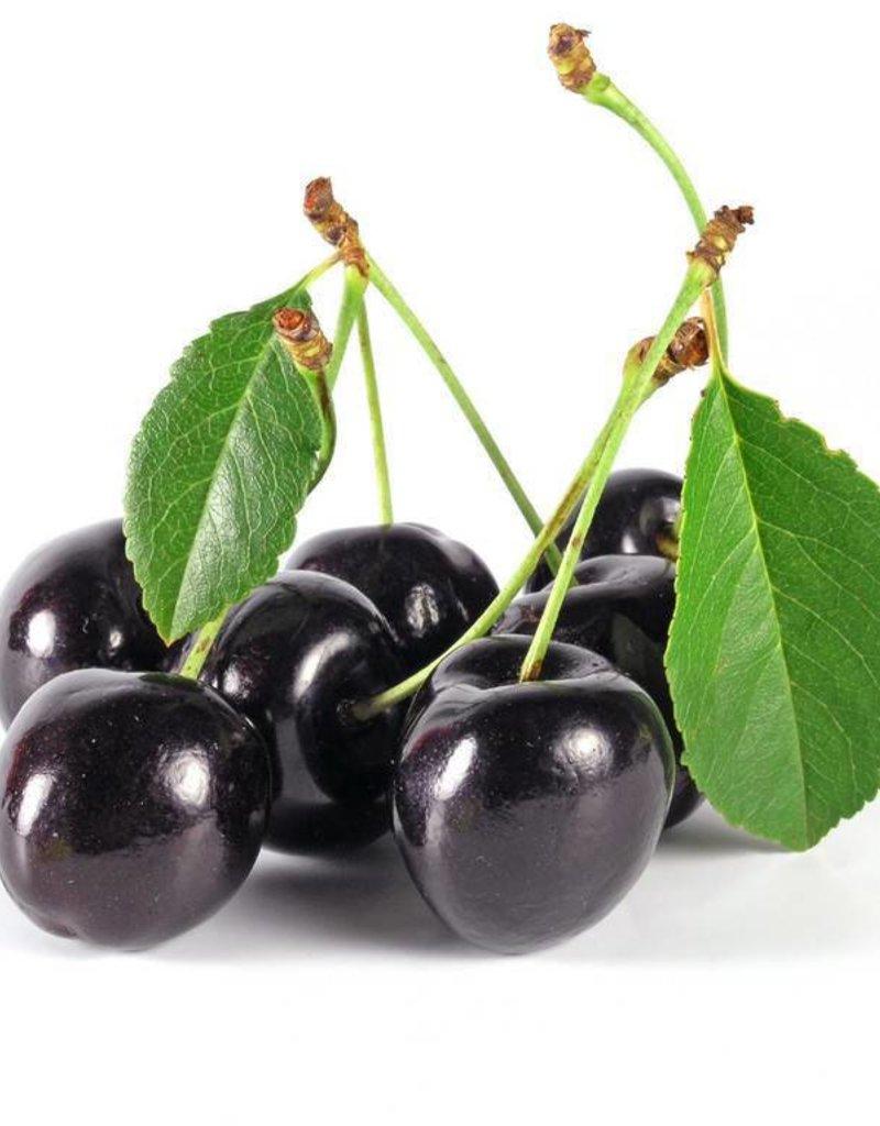 Black Cherry   30ml   Salt