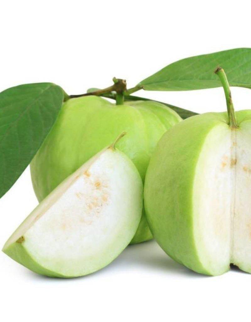 Guava | 30ml | Salt