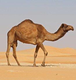 Desert Llama | 30ml | Salt