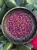 SIZE 6/0 #802 Lite Topaz/Purple Lined