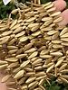 Dagger 5/16mm : Matte - Metallic Flax