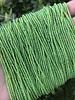 11/0 #744 Cintrine Green Lined