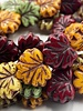 10x13mm Maple Leaf - Autumn Mix