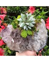 Crystals & Succulents: Citizen Vine, Folsom, August 26, Monday 6:00pm-8:30pm