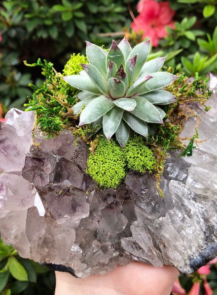 Crystals & Succulents: Citizen Vine, Folsom, August 26, Monday 6:00pm-8:30pm