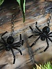 Class: Spider Earrings October 25th, Friday 6:00pm-8:30pm