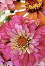 Zealous Zinnias Paint by Number