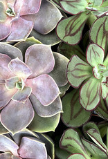 Such A Succulent Paint by Number