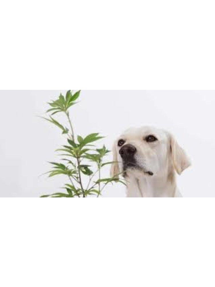 RESTORATIVE BOTANICALS Restorative Botanicals 4Paws Pet Balm 0.5oz