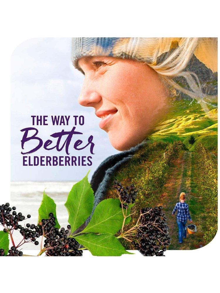 Nature's Way Sambucus Black Elderberry Original Syrup, 8oz.