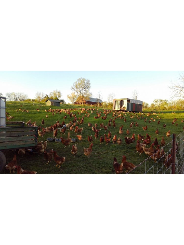WAUKA MEADOWS FARM Wauka Farms Local Eggs, 1 Dozen