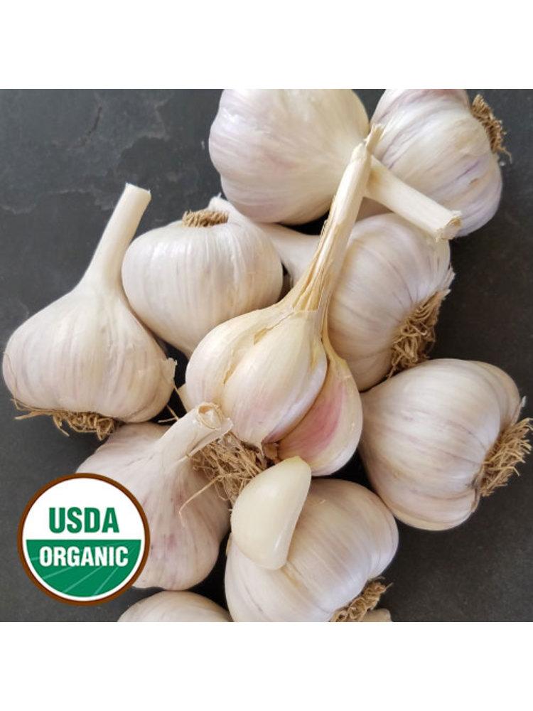 Fresh Point Organics Garlic, Organic - EACH