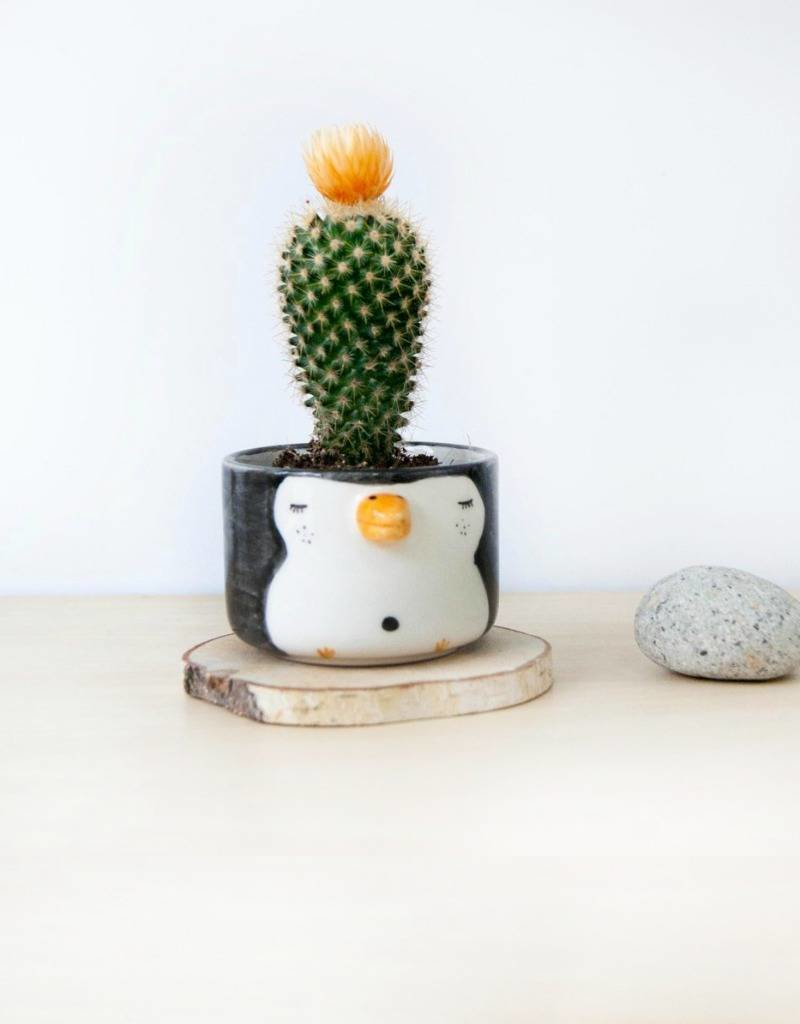 Noe Marin Ceramiste Céramique - mignon petit pot - Pingouin