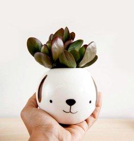 Noe Marin Ceramiste Ceramic - cute round bowl - Dog