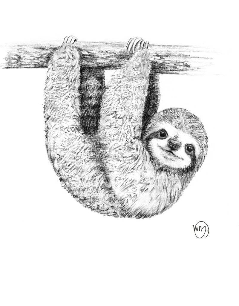 Le nid atelier Illustration - Sloth