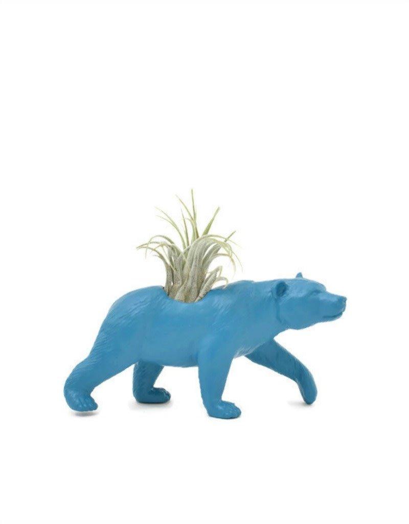Wild Child Animal Plante - Petit - Ours bleu