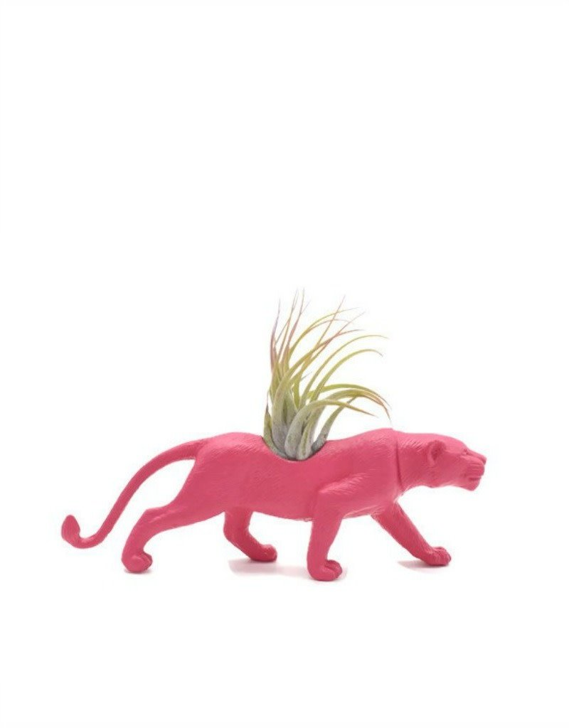 Wild Child Animal Plante - Petit - Tigre rose
