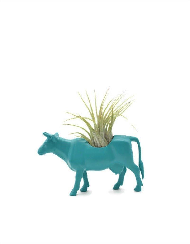 Wild Child Animal Plante - Petit - Vache bleu/vert
