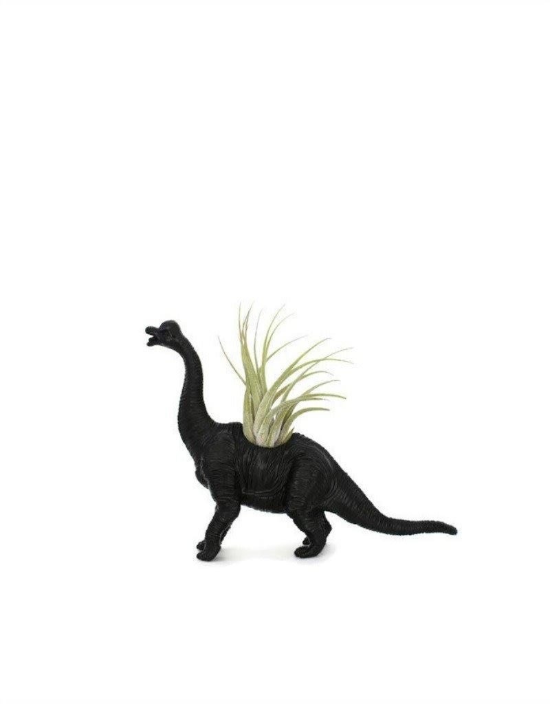 Wild Child Dinosaure Plante - Petit - Brachiosaure noir